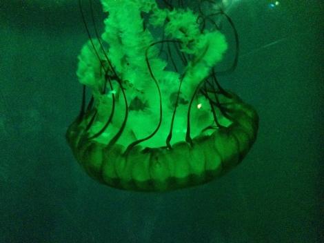 low prices on the London Aquarium