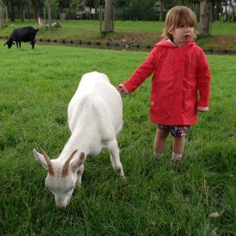 Kids farm Belgium Bruges